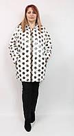 Турецкая женская весенняя куртка Ay-Sel в крупный горох, размеры 56-66