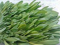 Кукуруза сахарная семена на микрозелень 100г.