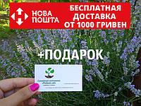 Лаванда настоящая семена (20 шт) леванда, лавенда, цветная трава насіння  + инструкция + подарок, фото 1