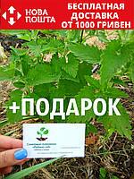 Котовник (кошачья мята, Népeta catária) семена 20 шт для саженцев насіння на саджанці + инструкции + подарок, фото 1