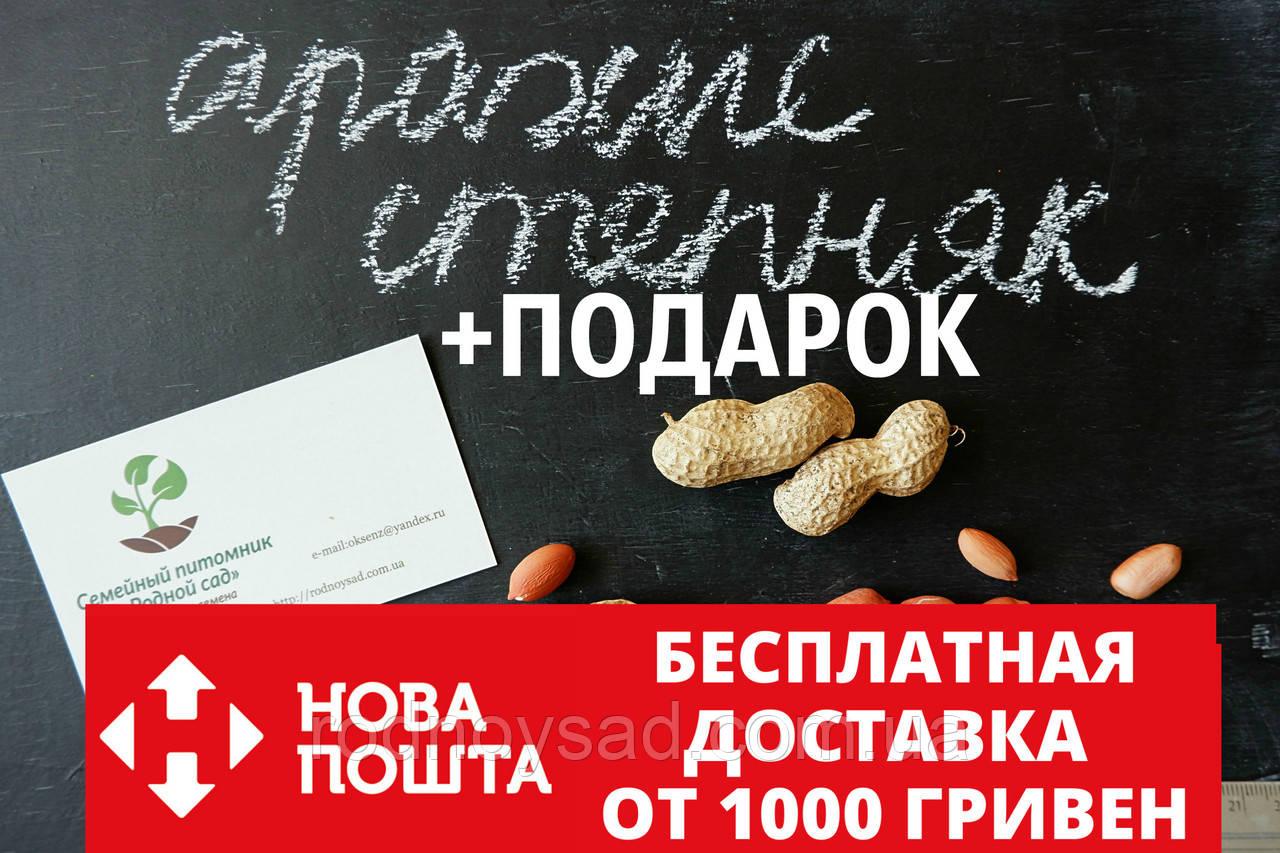 """Арахис сорт """"Степняк"""" семена (20 шт) земляной орех семена на посадку насіння арахіс земляний горіх"""