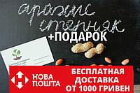 """Арахис сорт """"Степняк"""" семена (20 шт) земляной орех семена на посадку насіння арахіс земляний горіх, фото 1"""