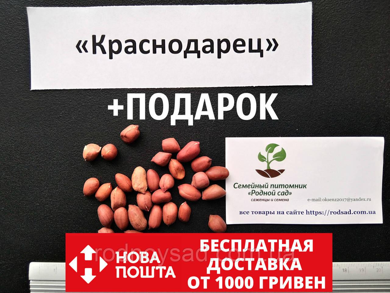 """Арахис сорт """"Краснодарец""""  семена (20 шт) земляной орех семена на посадку насіння арахіс земляний горіх"""