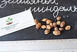 Чуфа семена (100шт) земляной орех миндаль, сыть, тигровый орех, зимовник + инструкция + подарок, фото 2