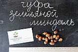 Чуфа семена (100шт) земляной орех миндаль, сыть, тигровый орех, зимовник + инструкция + подарок, фото 3