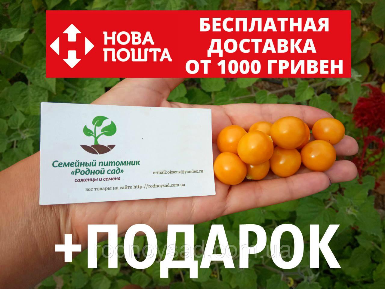 Физалис перуанский семена 50 шт (перуанская вишня) фізаліс насіння + инструкции