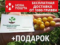 Физалис земляничный семена 50 шт фізаліс насіння + инструкции, фото 1