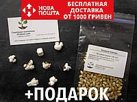 Попкорн семена (около 100 шт) воздушная кукуруза на посадку, фото 1