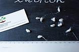 Хлопок семена (20 штук) хлопчатник обыкновенный (Gossypium hirsutum) + инструкции + подарок, фото 2