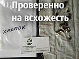 Хлопок семена (20 штук) хлопчатник обыкновенный (Gossypium hirsutum) + инструкции + подарок, фото 3