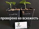 Хлопок семена (20 штук) хлопчатник обыкновенный (Gossypium hirsutum) + инструкции + подарок, фото 4