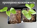Хлопок семена (20 штук) хлопчатник обыкновенный (Gossypium hirsutum) + инструкции + подарок, фото 7