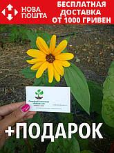 Подсолнух декоративный семена (20 шт)
