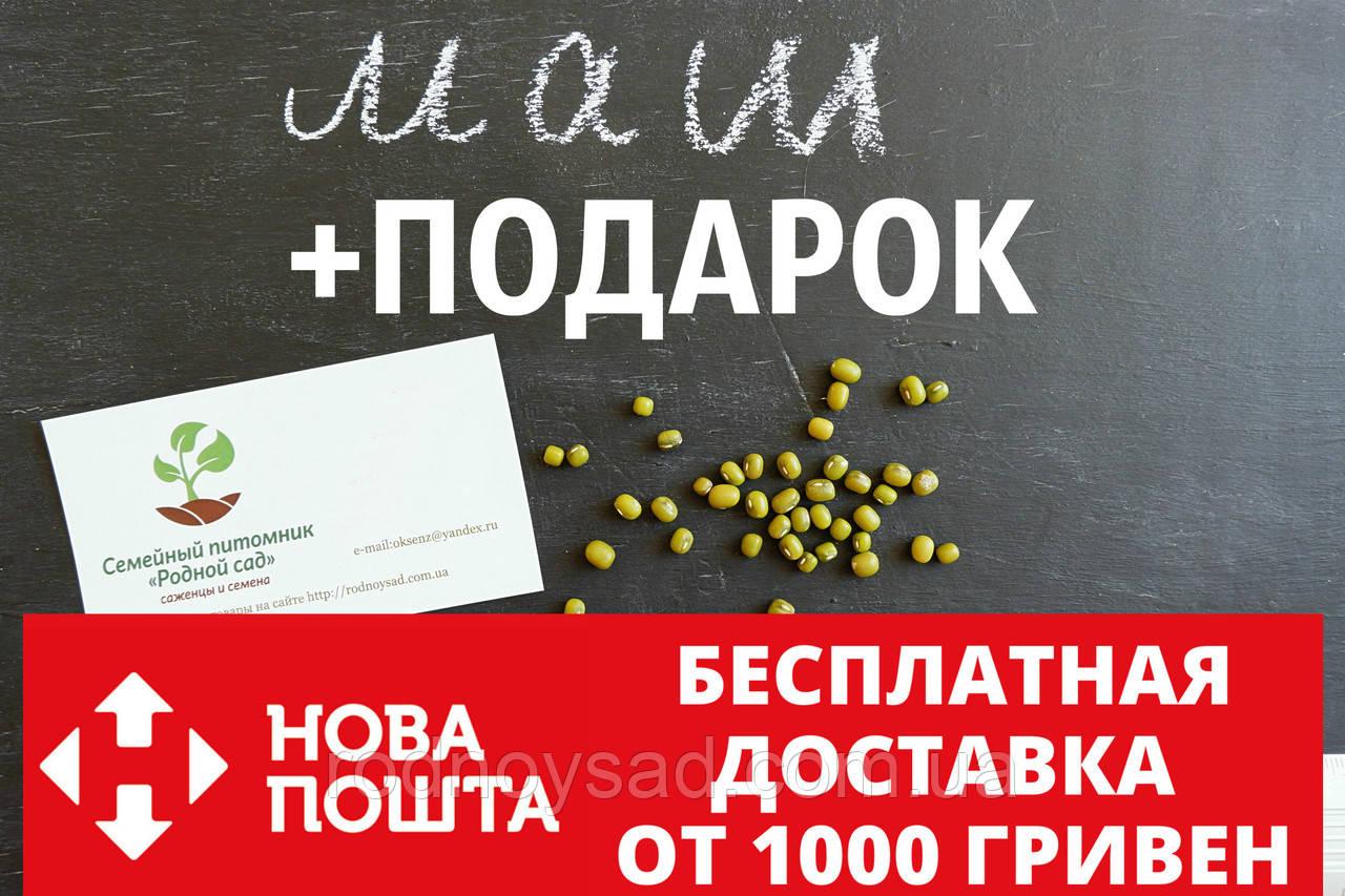 Маш семена (бобы мунг дал, золотистая фасоль)насіння (20 шт) Vigna radiata