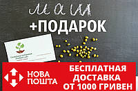 Маш семена (бобы мунг дал, золотистая фасоль)насіння (20 шт) Vigna radiata, фото 1
