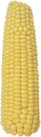 Семена кукурузы РАМ 8663