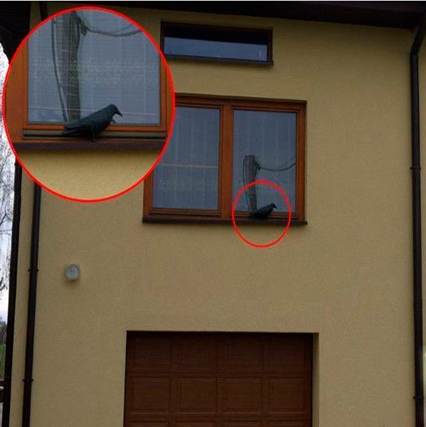 Ворон для отпугивания голубей