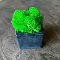 "Мох кашпо из бетона куб мини со мхом ""cube mini with moss"" вазон горшок холдер подсвечник ваза со мхом"