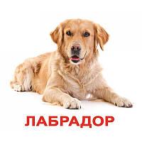 Породы собак с фактами. Карточки Домана. Вундеркинд с пелёнок, фото 1