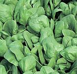 Семена шпината Боа, 25 000 семян, фото 2
