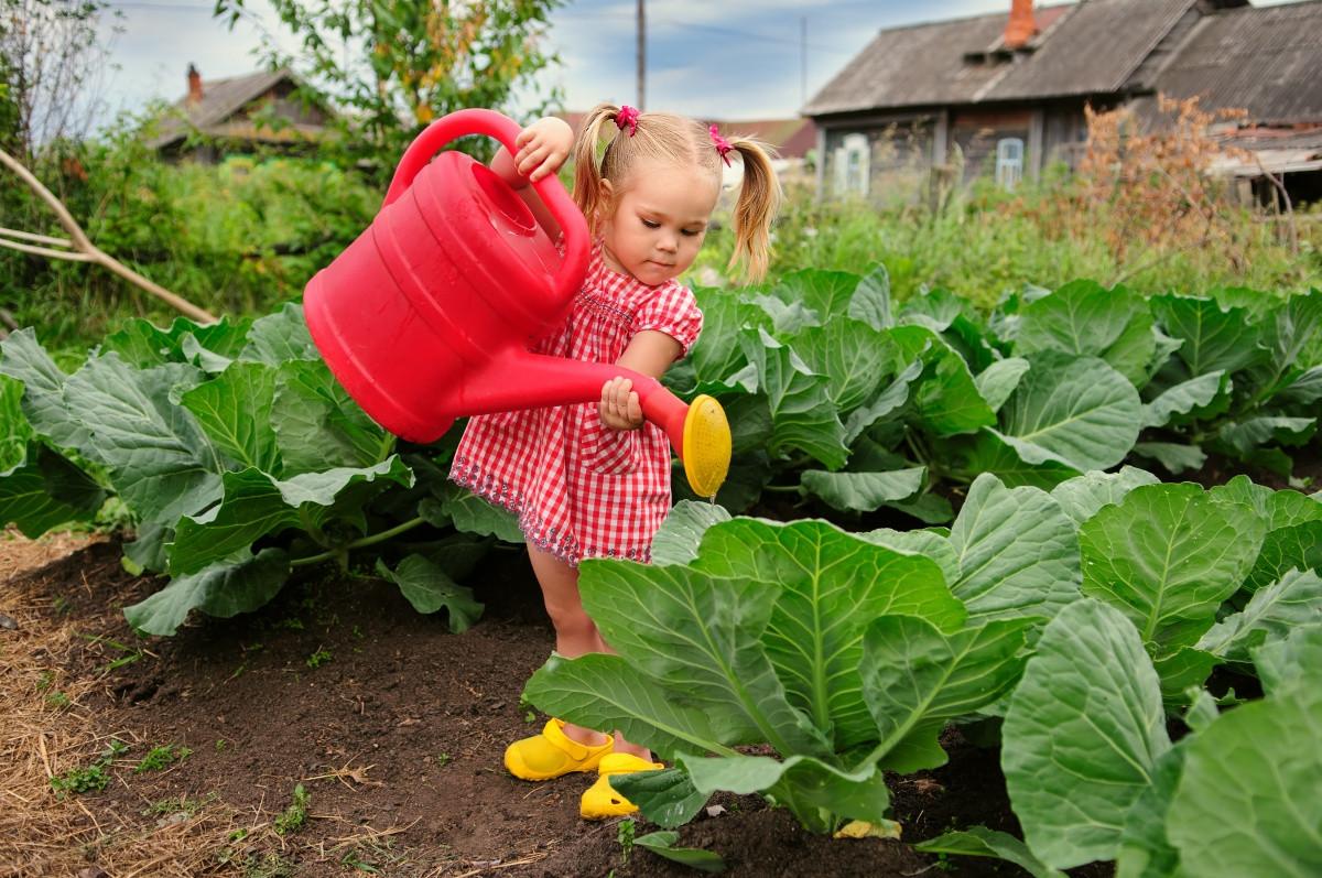Как поливать огурцы, перцы и другие овощи.