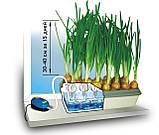 """Домашняя гидропонная грядка """"Луковое Счастье"""" - выращивание лука дома, фото 3"""