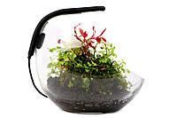 WabiSet — готовый набор для домашнего флорариума