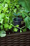 Грядка для растений Easy Grow, коричневая, фото 5