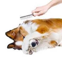 Вычесывание: собаки