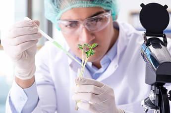 Химический анализ растений, тканевая диагностика надземной части растений