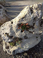 Ай-петрі, кораловий камінь, фото 1