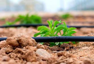 КАПЕЛЬНЫЙ ПОЛИВ - готовые решения для стабильного и прогнозируемого урожая в условиях засухи