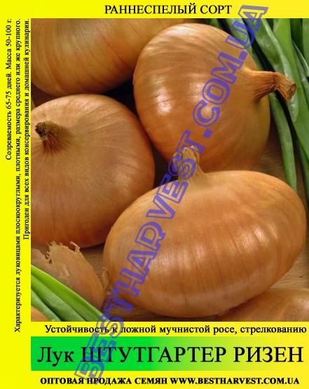 Семена лука «Штутгартер Ризен» 0.5 кг