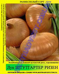 Насіння цибулі «Штутгартер Різен» 0.5 кг