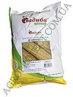 Насіння кукурудзи суперсолодкої Дейнеріс F1 (5000шт) Садиба Центр