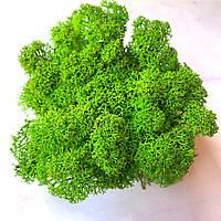 Скандинавский мох ягель зеленый, фото 1
