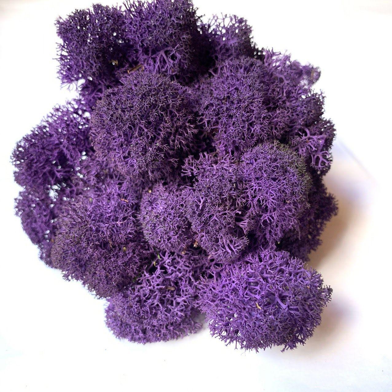 Скандинавський мох Violet