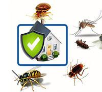 защита от насекомых в квартире, фото