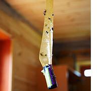 липучка для мух купить, фото