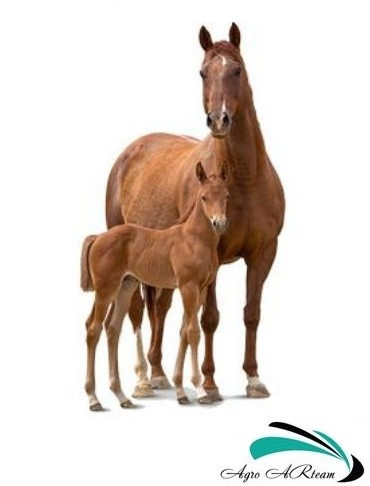 Оборудование для лошадей