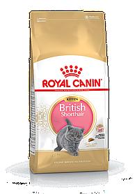 Royal Canin Kitten British Shorthair, 2кг — Сухий корм для кошенят британської короткошерстной породи котів
