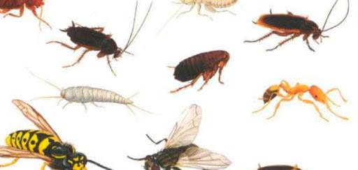 Средство от тараканов, клопов и других насекомых Glotox