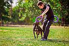Тренировочные снаряды для собак 28 см Collar Puller Standart (Пуллер Стандарт) 2 кольца, фото 2