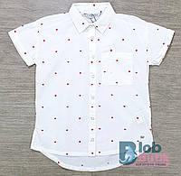 Рубашка школьная для девочки Tiffosi.