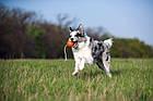 Іграшка для собак великих порід м'ячик зі шнуром 9*30 см Collar Liker Cord 9 (Лайкер Корд), фото 2