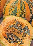 Семена тыквы сорт Голосемянная 0.5 кг, фото 2