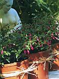 Книга Контейнерное садоводство круглый год, фото 2