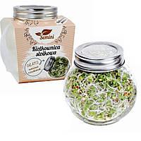 Банка-спраутер для проращивания зерен и семян Semini, 400 мл (семена в подарок)