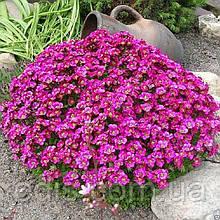 Арабис альпийский (резуха) розовый