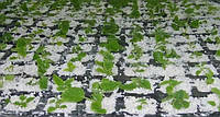 Перлит для выращивния растений АГРОПЕРЛИТ